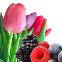 Pure Wild Berry Tulips Fragrance Oil