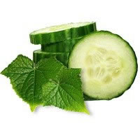 Pure Cucumber Mint Fragrance Oil
