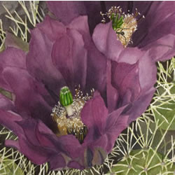 Pure Cactus Flower Fragrance Oil