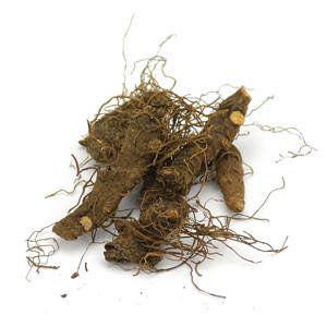 Bloodroot Root