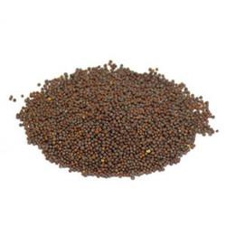 Mustard Seed - Brown