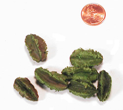 Arjun - Mini - Apple Green