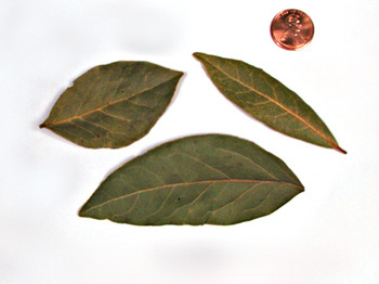 Bay Leaves - Semi-Select
