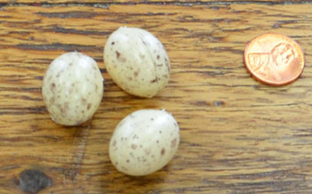 Bird Eggs - White w/ Speckles