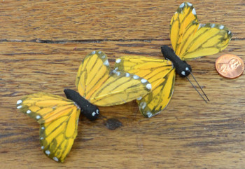 Butterfly Feather - Black and Orange-Yellow
