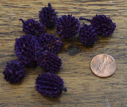 Casurina Pods - Purple