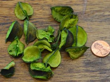 Cotton Petals - Apple Green
