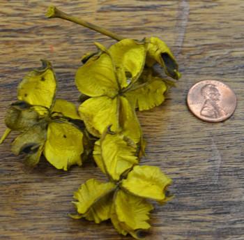 Cotton Petals - Yellow