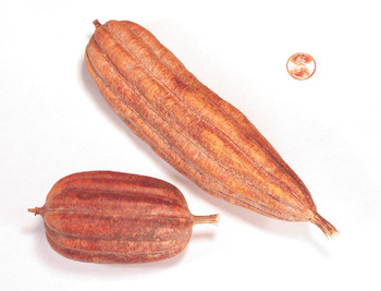 Jhinga Fruit