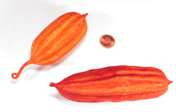 Jhinga Fruit - Orange