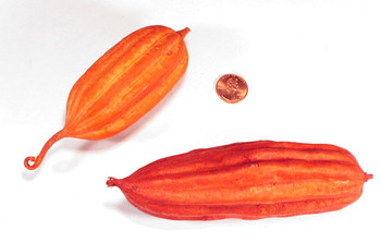 Jhinga Fruit - Orange