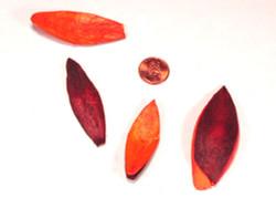 Lily Petals - Orange