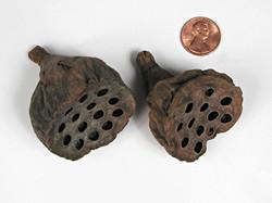Lotus Pods - Mini (2-4cm)