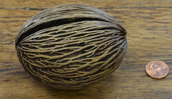 Mintolla Ball - Medium (7-9 cm) Natural