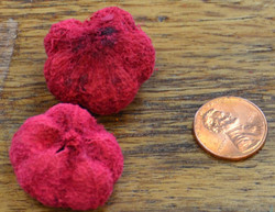 Peepal Pods - Bleached and Deodorized Red