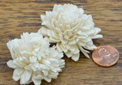 Shola Zinia - 4 cm White (bag of 10)