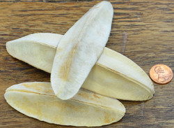 Triangle Pods - Bleached - 1lb
