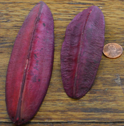 Triangle Pods - Red - 1lb