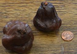 Wild Mushroom - Brown (bag of 10)