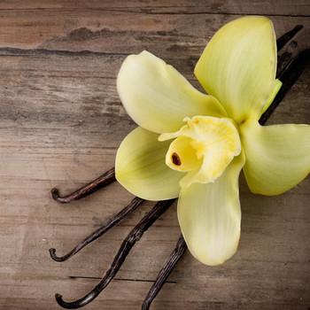 Vanilla Non Discoloring Fragrance Oil