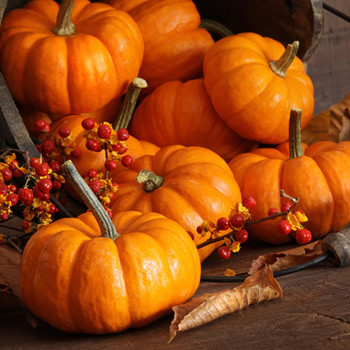 Pumpkin Harvest Fragrance Oil