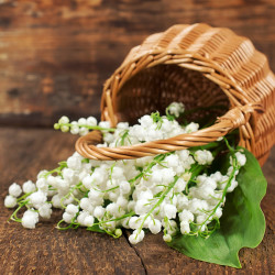 Lily of the Valley 1 Fragrance Oil