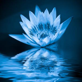 Blue Lotus Amber Fragrance Oil