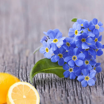Forget Me Not & Citrus Fragrance Oil
