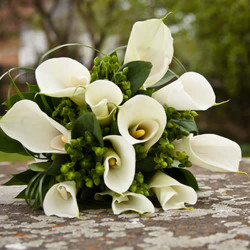 Calla Lily Fragrance Oil