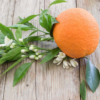 Champaca Neroli Twist Fragrance Oil
