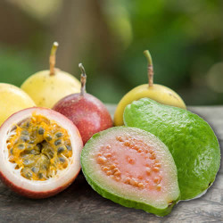 Passionfruit & Guava Fragrance Oil