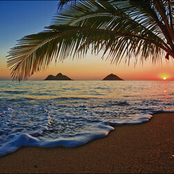 Honeymoon in Hawaii Fragrance Oil