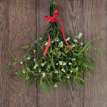 Merry Mistletoe Fragrance Oil