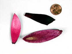 Lily Petals - Pink