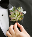 Groom and Groomsmen's Succulent Boutonnieres