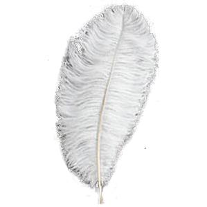 ostrich-plumes.jpg