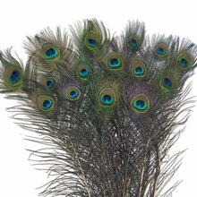 """200 Large Eye Peacock Tails Natural Feathers 30-35"""""""