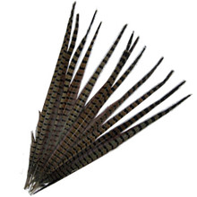 "200 Large 20-24"" English Pheasant Tails Natural"