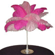 ostrich feather centerpiece kits