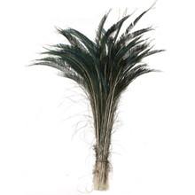 "500 Natural Peacock Tail Swords 20-25"""