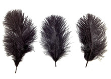 ostrich belly feathers