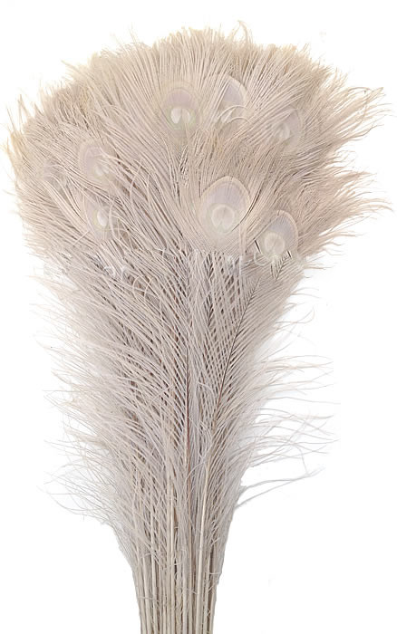 bleached peacock tails