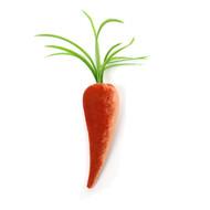 Velvet Carrot - Salmon