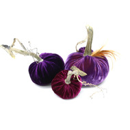 "Includes a 6"" Orchid with a Red Feather Plume, 5"" Violet and 4"" Magenta velvet pumpkin."