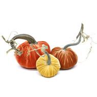 Velvet Pumpkin Trio - Citrus Spruce