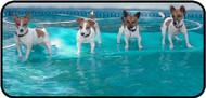 Aqua Pups