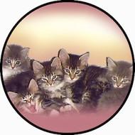 5 Kittens BR