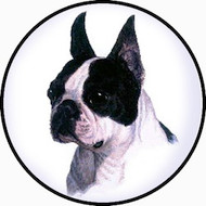 Boston Terrier BR