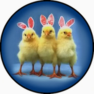 Bunny Chicks BR