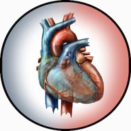 Anatomical Heart BR